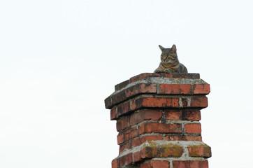 Kot na kominie