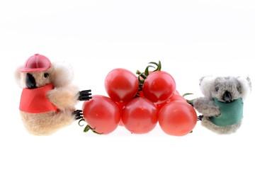 Toy koala collecting Cherry tomato