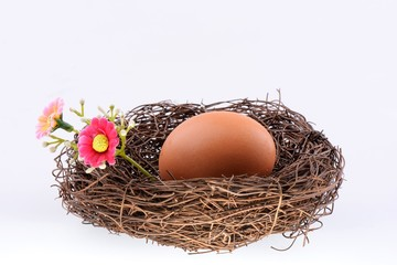 Bird's nest with an egg