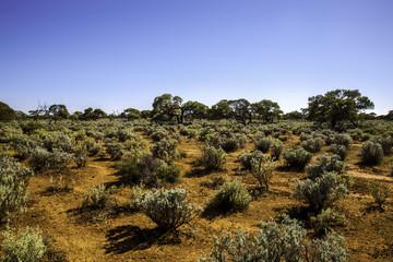 Desert sunrise Australia