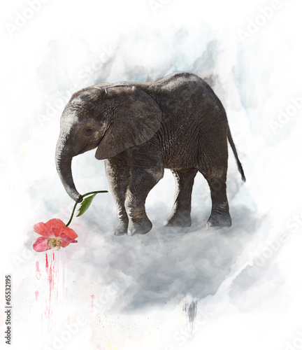 Fototapeta Young Elephant