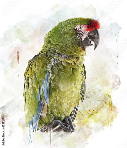 Watercolor Image Of  Parrot - 65532198