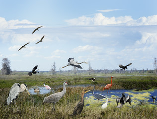 Florida Wetlands Collage