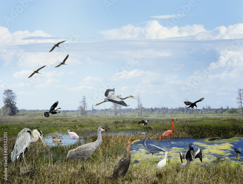 Foto op Aluminium Flamingo Florida Wetlands Collage