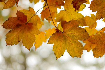 Collection of Beautiful Golden Autumn Leaves