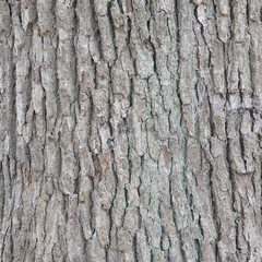 Bark of Elm  Seamless Tileable Texture