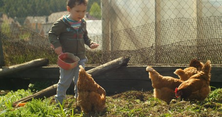 young boy feeding chickens at farm, 4k ultra hd video