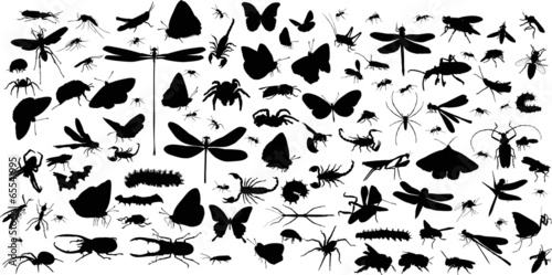 insects and spiders huge collection on white - 65541995