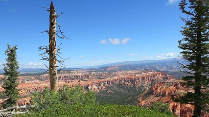 Bryce Canyon National Park with a bare tree in the foreground