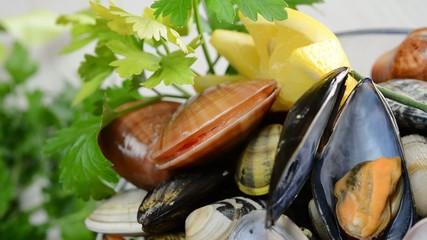 mollusc fasolari live