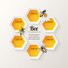 Bee infographics steps