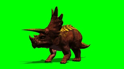 Triceratops dinosaur eats - green screen