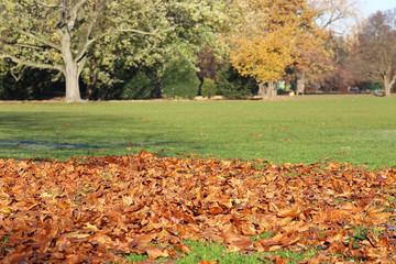 Herbstlaub auf Wiese