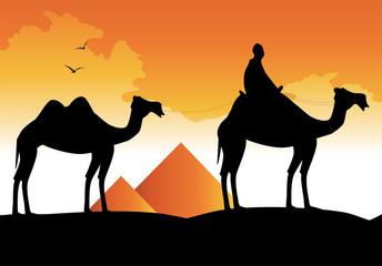 silhouette di cammelli e piramidi sullo sfondo