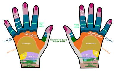 Riflessologia palmare, mani dorsi, salute, massaggi