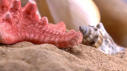 Ракушки на песке_01