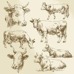 hand drawn cows