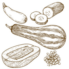 engraving illustration of many squash