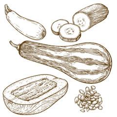 engraving illustration of many squash