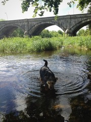dog swimming near bridge