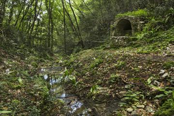 Lavoir ancien en forêt Croatie