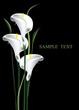 Постер, плакат: calla lilies