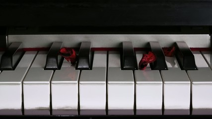 Dry Rose Leaves on Piano