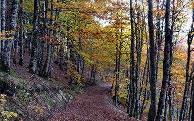 entrada al otoño