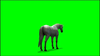 Unicorn graze  - green screen