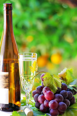 Glass and bottle of alvarinho wine