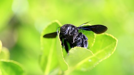 Macro of black bug on green leaf