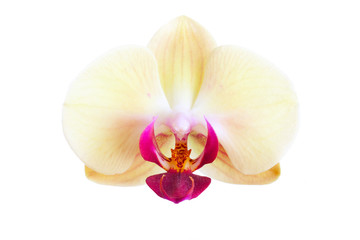 Flower of a yellow orchid