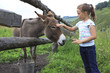 Little girl tenderly stroking a donkey.