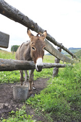 Donkey in the summer aviary.