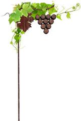 vigne naturelle sur enseigne  de cave viticole