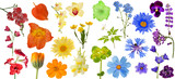 Fototapety set of rainbow color flowers isolated on white