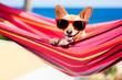 dog on hammock