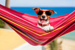 canvas print picture - dog on hammock