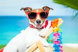 Fototapety dog summer vacation