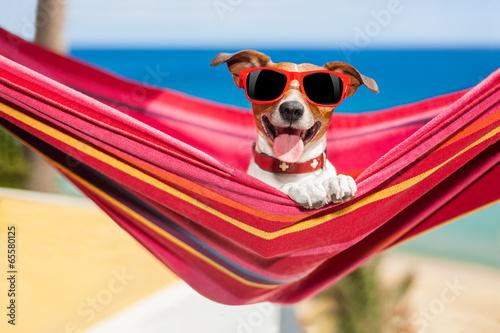 Leinwandbild Motiv dog on hammock