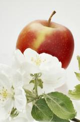 Apfel und Apfelblüten Hochformat