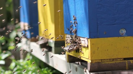 Bees are flying on a sunny afternoon in the hive.
