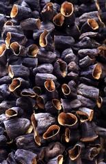 Dried Eggplants, Istanbul