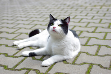 Cat lying on the ground outside