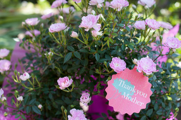 Miniature roses, thank you on mother's day
