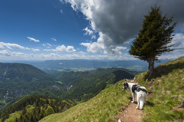 Dog on mountain path