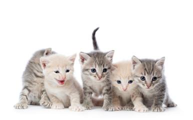 Fife kittens.