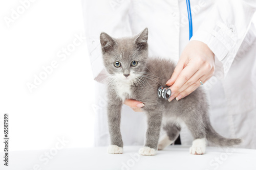 Vet with stethoscope and kitten