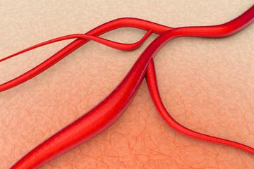 Arterie