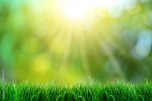 Zdjęcia na płótnie, fototapety, obrazy : Green grass with sunset views.